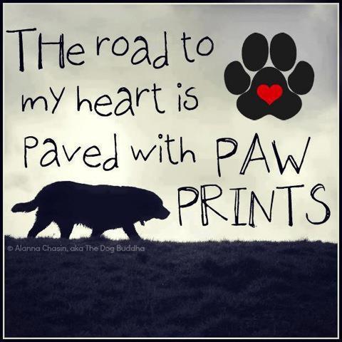 Pawprints