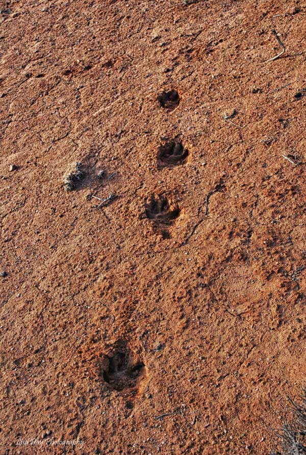 sandy-footprints