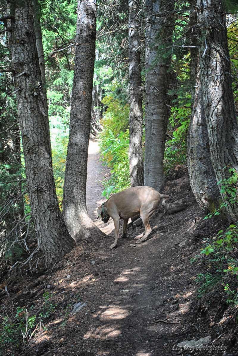 woodsy-walk-1