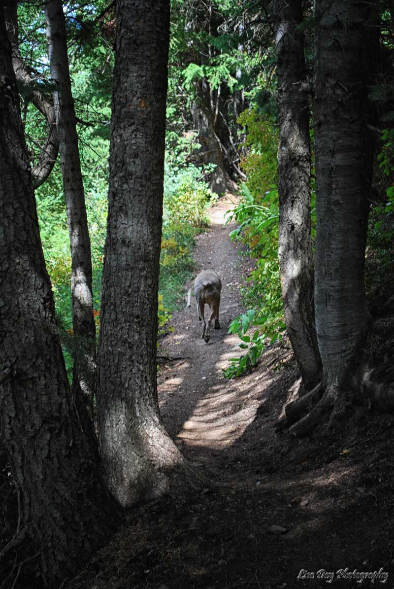 woodsy-walk-2