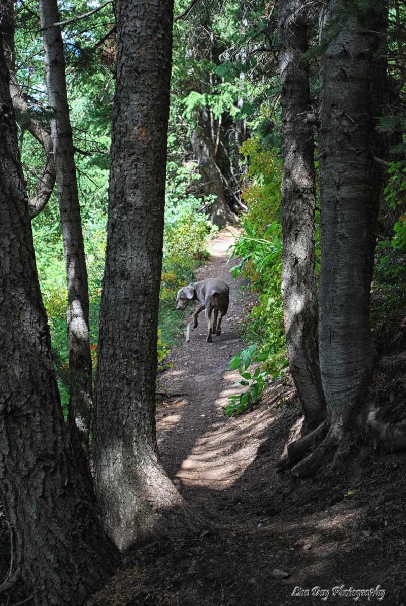 woodsy-walk-3