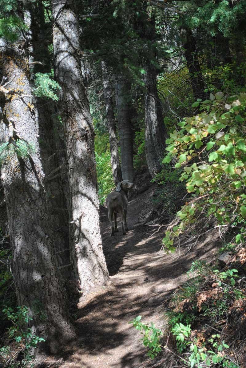 woodsy-walk