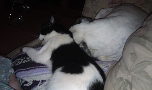 Roux snuggling her best friend and my daughter calls the pair  Kitler and Rousellini
